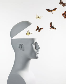 Head opening with butterflies flying out.