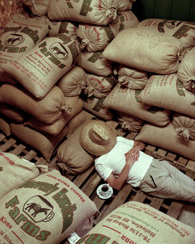 Coffee farm, coffee plants, coffee beans, bags of coffee