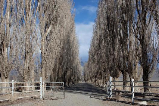 Open Gate Leading Down A Poplar Tree Lined Road