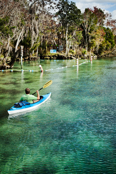 Crystal Springs, Florida, USA. A man looks for manatee while paddling a sea kayak in clear teal water near cypress trees.
