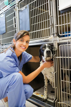 Smiling vet placing dog in kennel