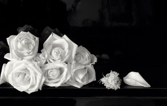 Still-Life Of Shells And Roses