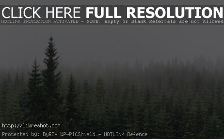 Free image of Winter Forest