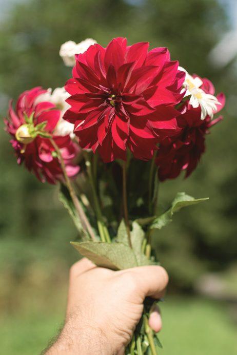 FREE IMAGE: Flower bouquet   Libreshot Public Domain Photos