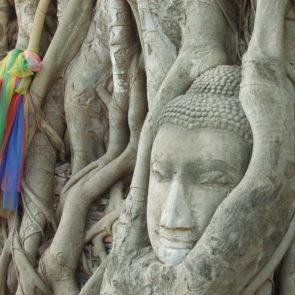 Buddha's Head In The Tree
