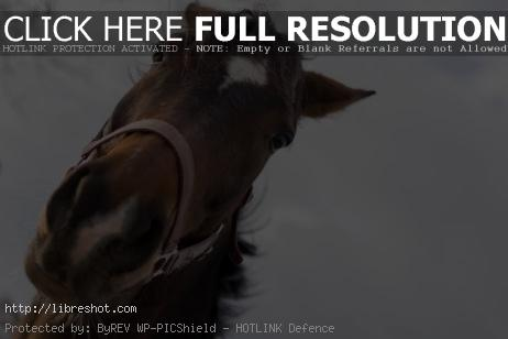 Brown Horse Head | Free Images For Commercial Use