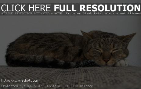 Free image of Cat Sleeping On The Couch