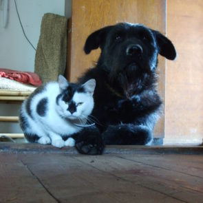 Dog and cat – best friends