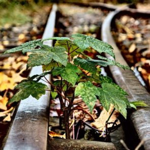 Small Tree And Rails