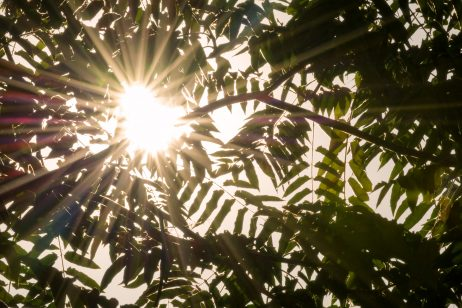 FREE IMAGE: Sun rays passing through leaves | Libreshot Public Domain Photos