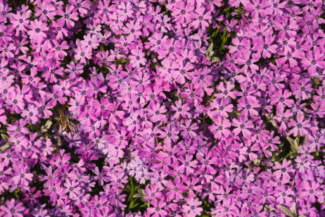 Free Image: Flower Background | Libreshot Public Domain Photos