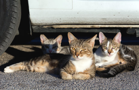 Free image of Three Street Cats