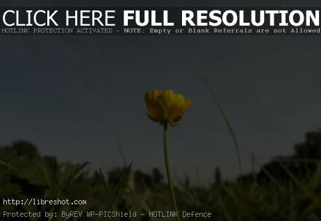 Solitary Yellow Flower