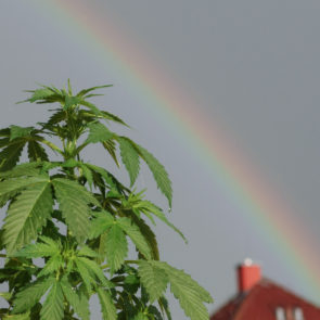 Marijuana And Rainbow