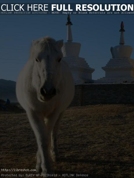White Horse With Stupas