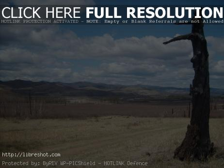 Burned tree in Mongolia