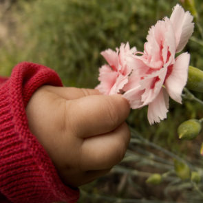 Baby hand picking the flower