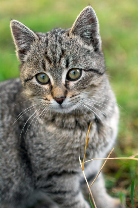 Cute kitten portrait | Free Images For Commercial Use