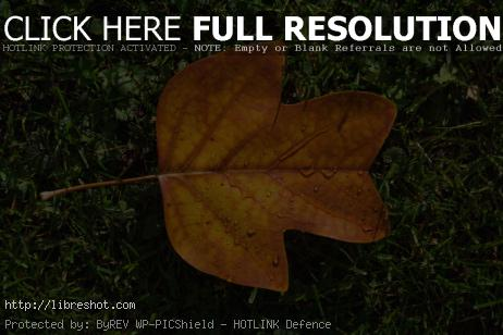 Autumn Leaf on Green Grass | Free Images For Commercial Use