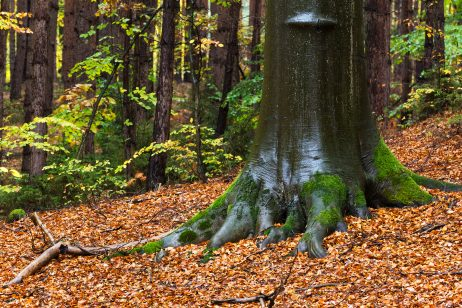 FREE IMAGE: Tree In the Autumn Forest | Libreshot Public Domain Photos