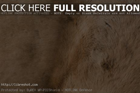 Horse Fur Texture | Free Images For Commercial Use