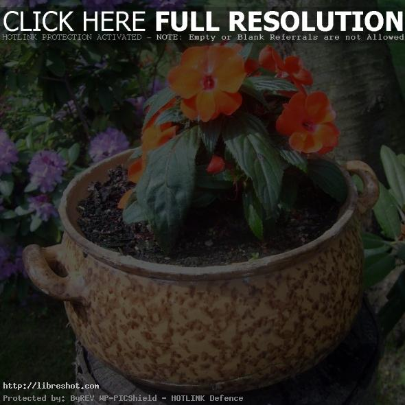 Flowerpot with flowers