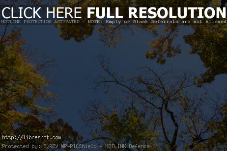 Free image of Autumn Tree Crowns