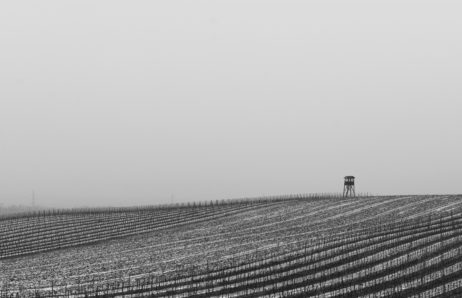 Free Image: Winter Vineyard | Libreshot Free Stock Photos
