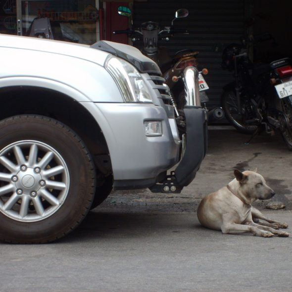Dog Lying Before Car