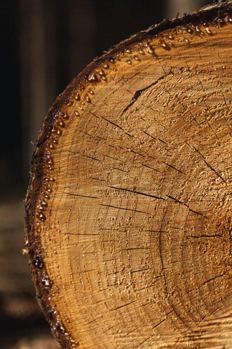 FREE IMAGE: Cut Log | Libreshot Public Domain Photos
