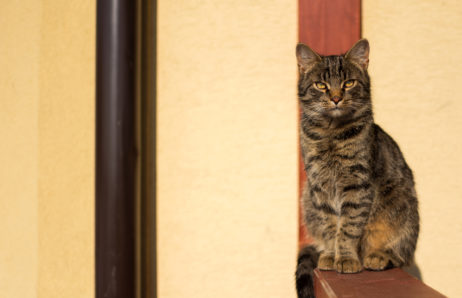 Free Image: Tabby Cat | Libreshot Free Fine Art Photos