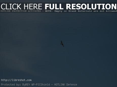 Bird of prey on the sky