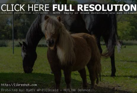The horse and the pony | Free Images For Commercial Use
