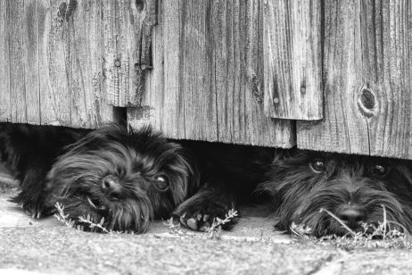 FREE IMAGE: Dogs are guarding the house | Libreshot Public Domain Photos