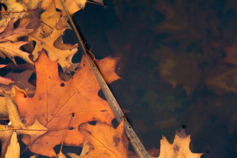 Free image of Autumn Leaves in Water