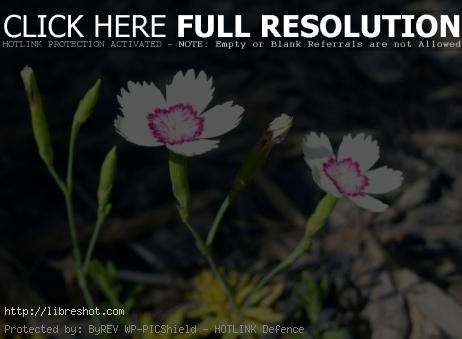 Blossom – Macro
