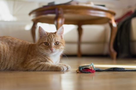Free Image: Cat at Home | Libreshot Public Domain Photos