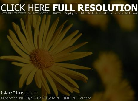 Free image of Yellow Flower