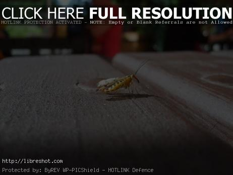 Photo of insect
