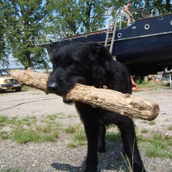 Black dog with a stick