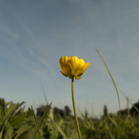 Solitary Yellow Flower