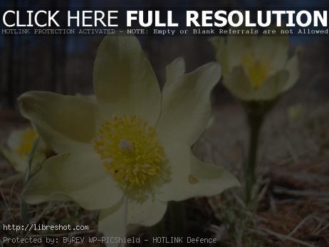 Flowers Mongolia