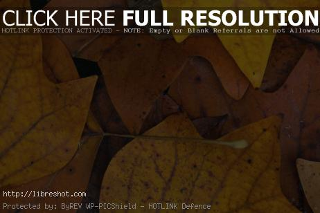 Autumn Leaves Background | Free Images For Commercial Use