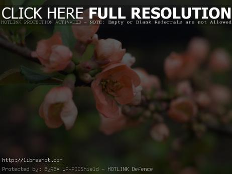 Free image of Spring Cherry Blossoms