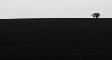 Free Image: Minimalist photo of the field and tree | Libreshot Public Domain Photos