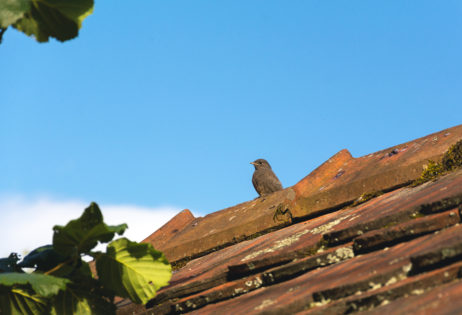 Free image of Bird on the roof