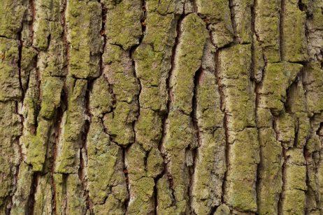 Free Image: Tree bark texture | Libreshot Public Domain Photos