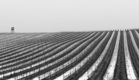 Free Image: Vineyard Covered With Snow | Libreshot Public Domain Photos