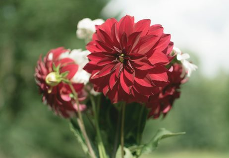 FREE IMAGE: Bouquet of Flowers | Libreshot Public Domain Photos
