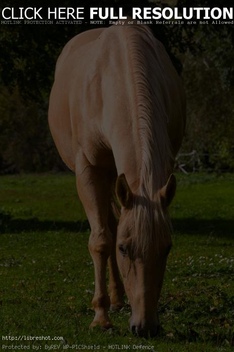 Buckskin horse | Free Images For Commercial Use